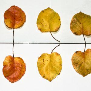 Floramedia UK Leaves Shoot