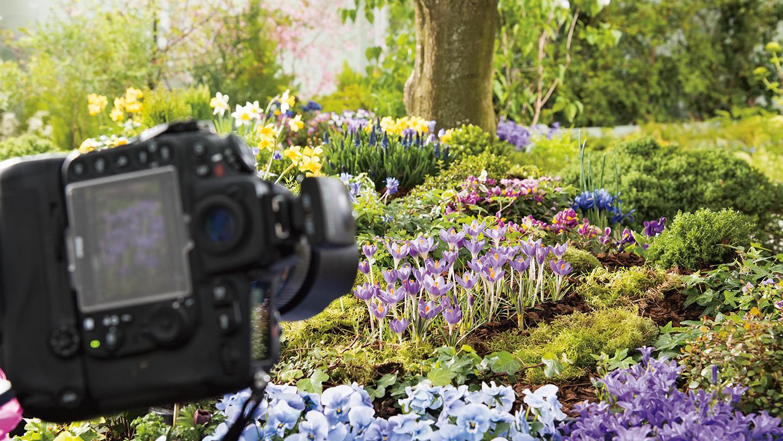 Floramedia UK Green House Shoot